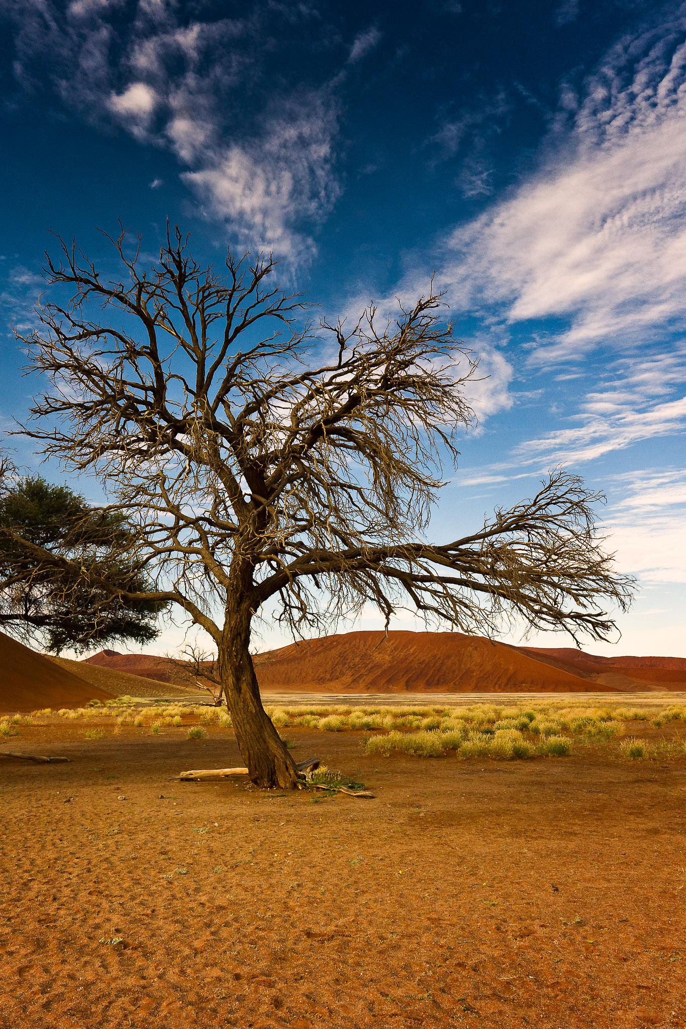 Dried Out Tree @ Sossusvlei, Namibia